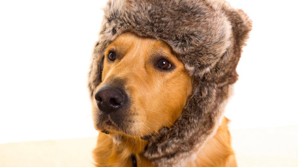 Odborník na výživu zvířat radí, jak se v zimních měsících nejlépe postarat o psa