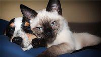 Kočka a pes v jednom bytě? Žádný problém! 4 rady pro harmonické soužití