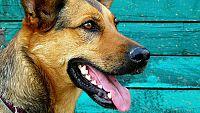 Nepodceňujte zubní hygienu u zvířat! Jak se nejlépe postarat o psí chrup?