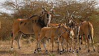 Zoo Ostrava již po jedenácté v sobotu 22.8.2020 nabídne Den pro antilopu Derbyho